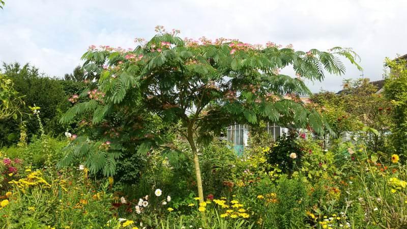 Monet Garten 4